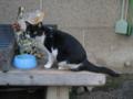 柳森神社の猫, #3073