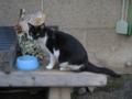 柳森神社の猫, #3074