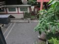 柳森神社の猫, #3210