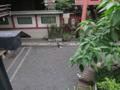 柳森神社の猫, #3211