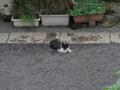 柳森神社の猫, #3212