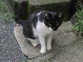 柳森神社の猫, #3218