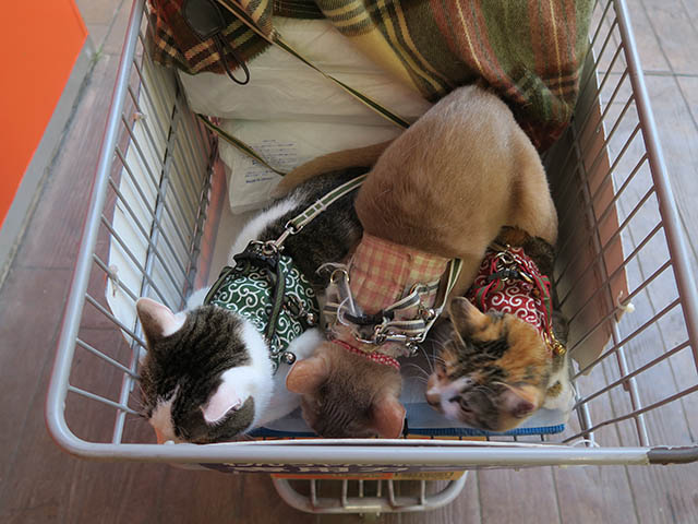 Caterina, Umi & Hana, #2284