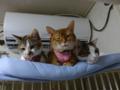 Beatrice, Umi & Hana, #2589