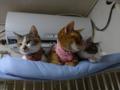 Beatrice, Umi & Hana, #2590