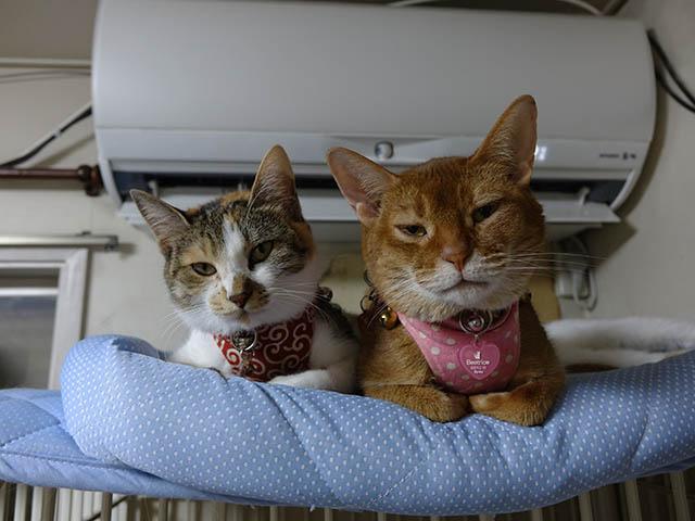Beatrice, Hana & Koumi, #2592