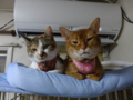 Beatrice, Hana & Koumi, #2593