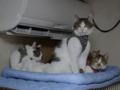 Caterina, Umi, Hana & Koumi, #2595