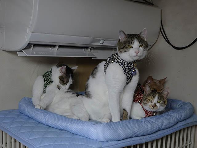 Caterina, Umi, Hana & Koumi, #2597