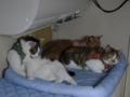 Caterina, Umi & Hana, #2599
