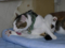 Caterina, Umi & Hana, #2604