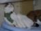 Caterina, Umi & Hana, #2606