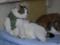 Caterina, Umi & Hana, #2607