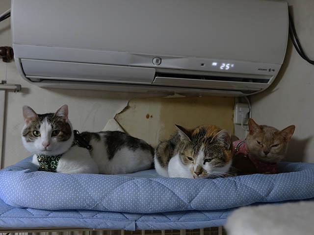 Caterina, Umi & Hana, #2612