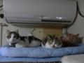 Caterina, Umi & Hana, #2613