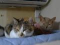 Caterina, Umi & Hana, #2614