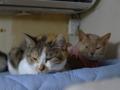Caterina, Umi & Hana, #2615