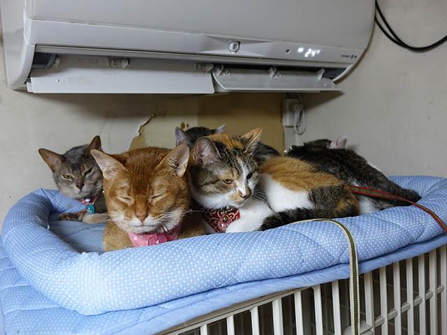 Beatrice, Margherita, Umi, Hana & Koumi, #2647