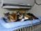 Beatrice, Margherita, Umi, Hana & Koumi, #2648