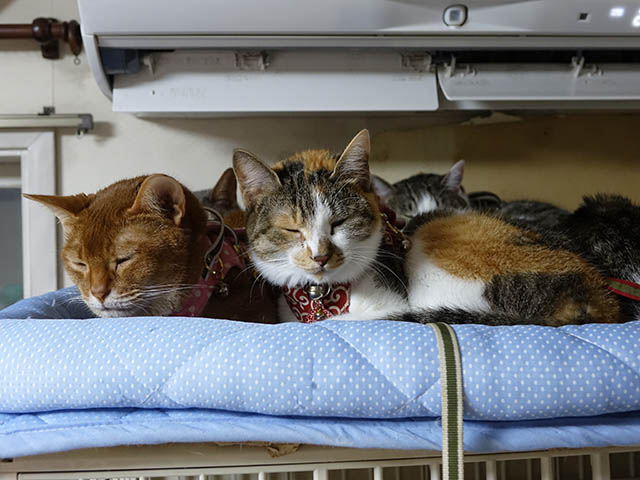 Beatrice, Margherita, Umi, Hana & Koumi, #2649