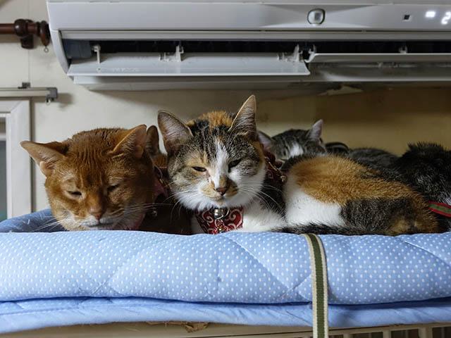 Beatrice, Margherita, Umi, Hana & Koumi, #2650