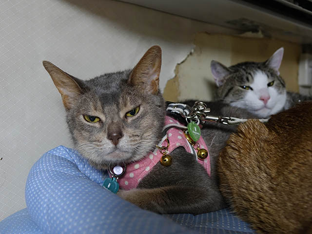 Beatrice, Margherita & Koumi, #2651