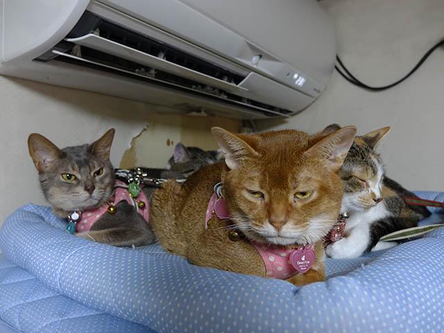 Beatrice, Margherita, Umi, Hana & Koumi, #2653