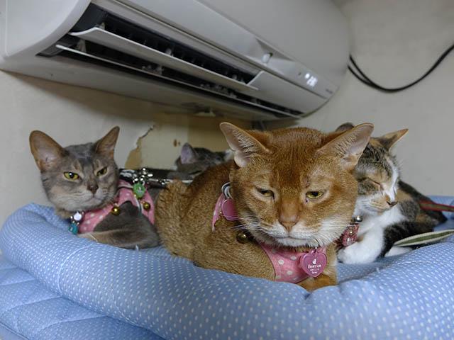 Beatrice, Margherita, Umi, Hana & Koumi, #2654