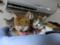 Beatrice, Margherita, Umi & Hana, #2655