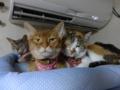 Beatrice, Margherita, Umi & Hana, #2656