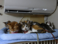Beatrice, Margherita, Umi, Hana & Koumi, #2658