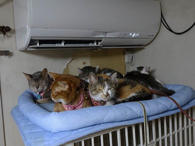 Beatrice, Margherita, Umi, Hana & Koumi, #2659