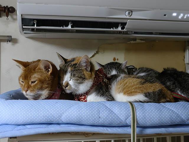 Beatrice, Margherita, Umi, Hana & Koumi, #2660