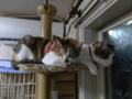 Umi, Hana & Koumi, #2181