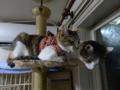 Umi, Hana & Koumi, #2183