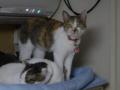 Margherita, Umi & Hana, #2845