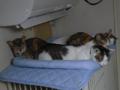 Margherita, Umi, Hana & Koumi, #2892