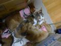 Valentina, Beatrice, Elisabetta & Hana, #3128