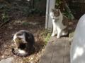 Mama-Imo & Hoshi, #3266