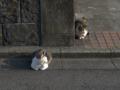 Mama-Imo & Hoshi, #0325