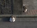 Mama-Imo & Hoshi, #0326