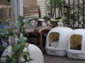 Yuki, Koyuki & Hoshi, #0336 (Closeup)