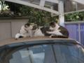 Mama-Imo, Koyuki & Hoshi, #0398