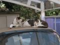 Mama-Imo, Koyuki & Hoshi, #0400