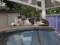 Mama-Imo, Koyuki & Hoshi, #0401