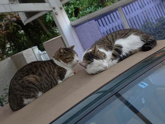 Mama-Imo & Hoshi, #3481
