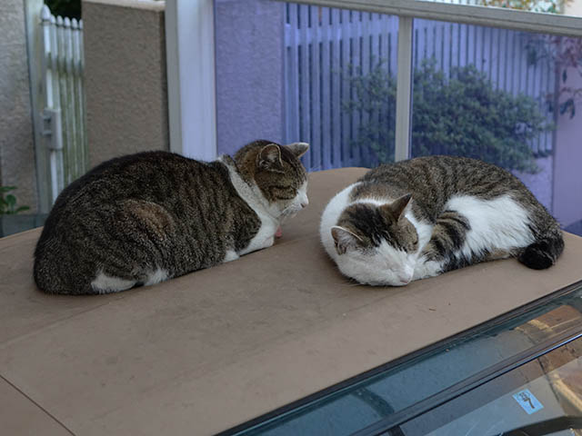 Mama-Imo & Hoshi, #3482