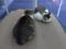 Mama-Imo & Hoshi, #3488