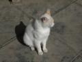 白峯寺の猫, #3735