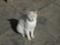 白峯寺の猫, #3736